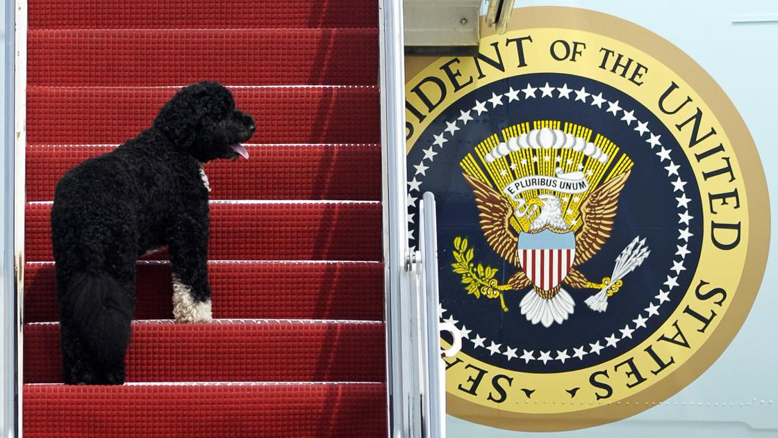 obamas'-dog-bo,-once-a-white-house-celebrity,-dies-from-cancer