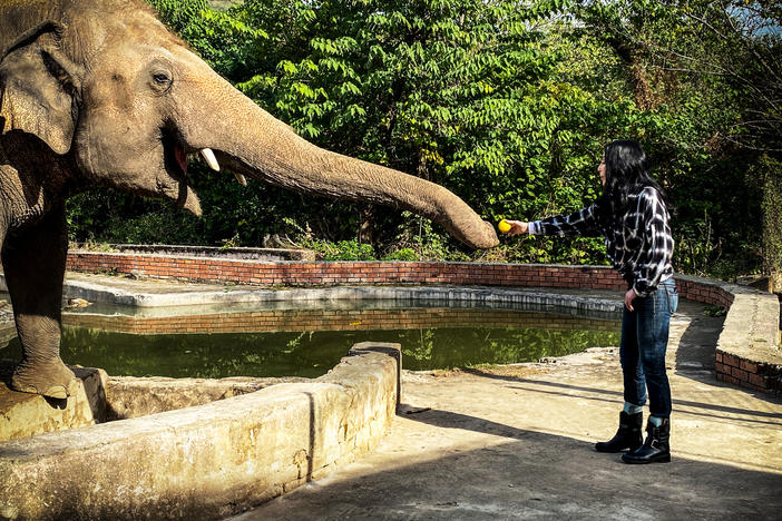 cher,-an-elephant,-and-the-power-of-celebrity