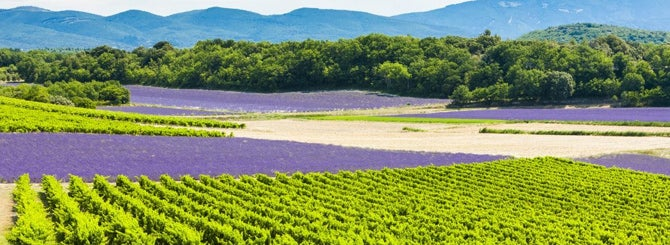 provence-rose:-quality,-cash-and-celebrity